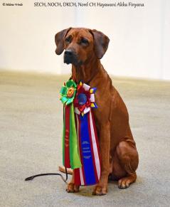 Akka Danish and Nordic Champion