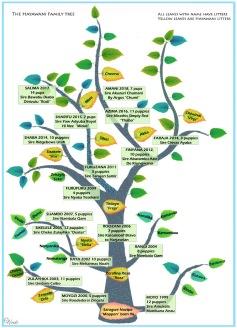 Hayawani familytree