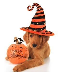 Halloweenhund