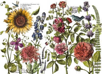 Botanists´s Journal - Stor transfer