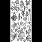 Seashore - dubbel