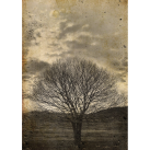 MINT Decoupagepapper Sepia Tree  30x42cm