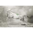 MINT Decoupagepapper White Horse 59x84cm