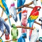 BIRDS Belles & Whistles Rice Papers: 3st ark à ca30x32cm