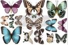 Re Design Décor Transfer - Butterfly  - LITEN ca 30x46cm