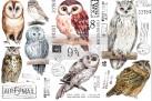 Re Design Décor Transfer - Owl - LITEN ca 30x46cm