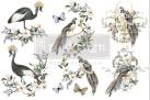 Re Design Décor Transfer - Rare Birds - LITEN ca 30x46cm