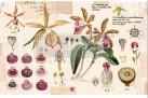 Re Design - Purple Beauty 48x76cm