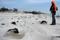 På vintern bildas spännande former på de orörda sandstränderna