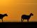 Foto David Bengtsson  sunsethalvfar