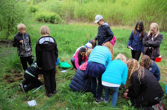 Tepåseförsöket i Gävle. Foto: Vetenskap & Allmänhet.