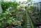 växthus