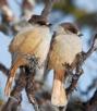 fågel vinter