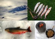 fiske kjell.erik alhgren