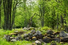 stenåskog
