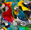 Mössa Parrot - REA köp direkt