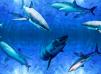 Mössa Sharks - REA köp direkt