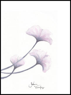 Blushing flower