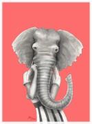 Elephant woman coral