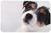 Matskålsunderlägg Hundbild, 43 x 28 cm
