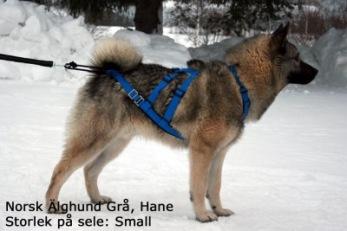 NEEWA SLED DOG - X-BACK - X-back storlek S Blå