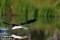 Smålom, Västmanland  _BAC2814  1280 72dp
