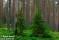 Barrskog, Lappland_BIA1188 1280 72dpi