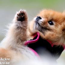 Husbilgrannens Hund, Dalarna_BAC9221 1280 72dpi