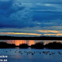 Hornborgasjön, Västergötland_BAC0290  1280 72dpi