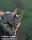 Ekorre, Halland_BAC6296b 1280 72dpi