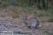 Kanin, Halland_BAC4508 1280 72dpi