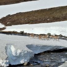 Renar, Lappland_BAC9134  1280 72dpi