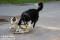 Bamse och bästisen Raven, Halland   DSC_0097 1280 72dpi
