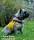 Cajsa assistanshund, Halland _BIA6635_003155 1280 72dpi