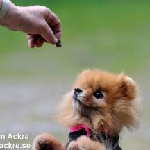 Husbilgrannens Hund, Dalarna_BAC9222  1280 72dpi