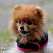Husbilgrannens Hund, Dalarna_BAC9224  1280 72dpi