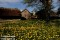 Ogräs kan vara vackert _BAC1848 1280 72dpi