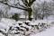 Vinter _BAC4526 1280 72dpi