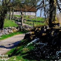 Våren gör sitt intåg _BAC1576 1280 72dpi