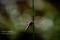 Trollslända, Halland _BAC8309 1280 72dpi