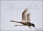 Bilder på fåglar (Birds)