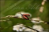 Bilder på insekter
