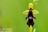 Bilder på växter, orkideer mm