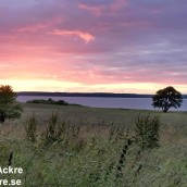 Hornborgasjön, Västergötland_BIA1249 1280