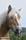 _BAC3063 Ardennerhäst, Halland 1280 72dpi