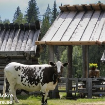 Fäbod, Dalarna_BAC2756 1280 72dpi