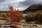 _BAC5455 Dörålen, Norge 1280 72dpi