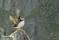 _BAC5960 Lunnefågel, Norge 1280 72dpi