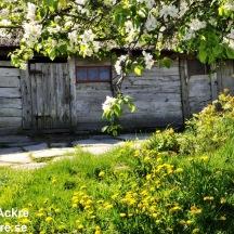 _BAC5872 Äskhults by, blommor vid Bengtas, Halland 1280 72dpi