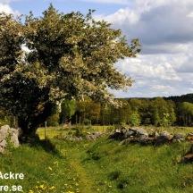 _BAC5413 Äskhults by, nedskuren väg mellan Jönsas och Göttas (Mösagatan) Halland1280 72dpi
